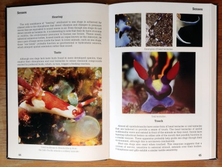 Nudibranch Behavior page spread