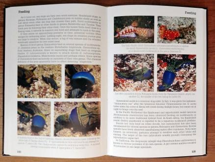 Nudibranch Behavior page spread 03