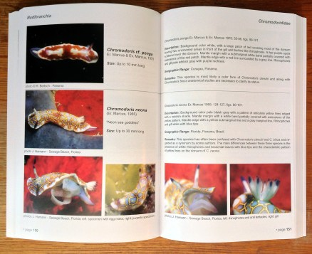 Caribbean Sea Slugs inside page spread