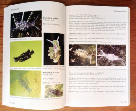 Caribbean Sea Slugs inside page spread 02