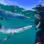 Mario Vitalini fishinfocus blue shark selfie