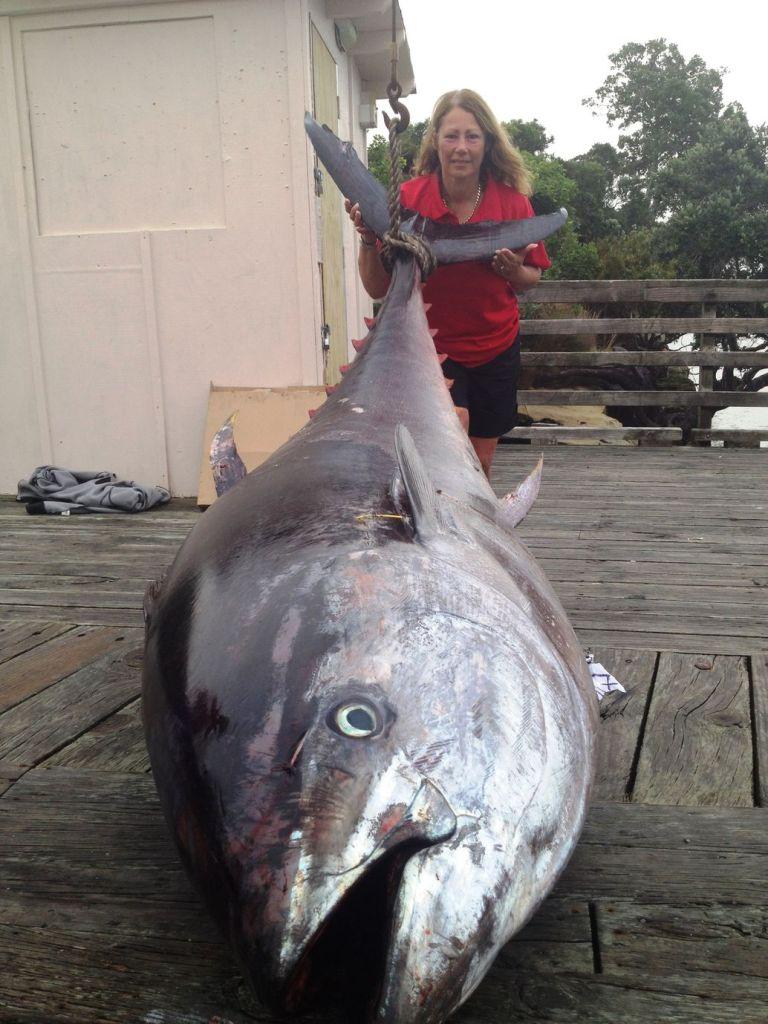 a 907 lb IGFA World Record Pacific Bluefin Tuna