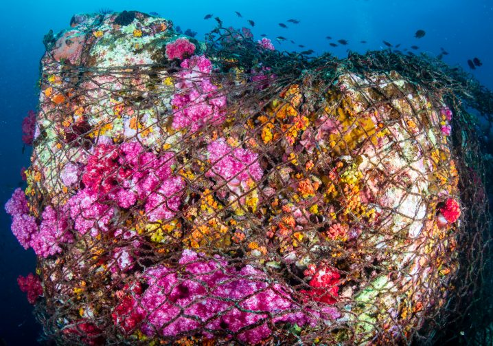 A colorful coral reef trapped in a ghost fishing net