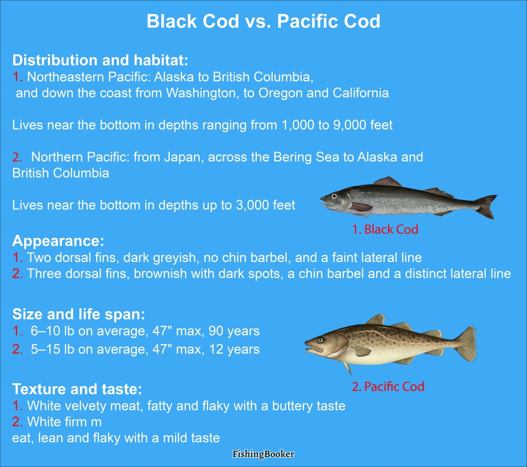 a visual comparison of Black Cod vs. Cod, distribution, appearance, and taste differences between the two species