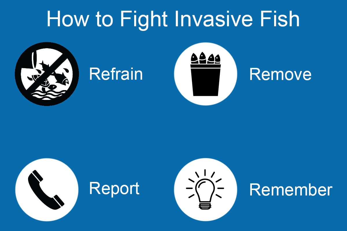 An infographic explaining the four steps for fighting invasive fish: Retain, Remove, Report, and Remember