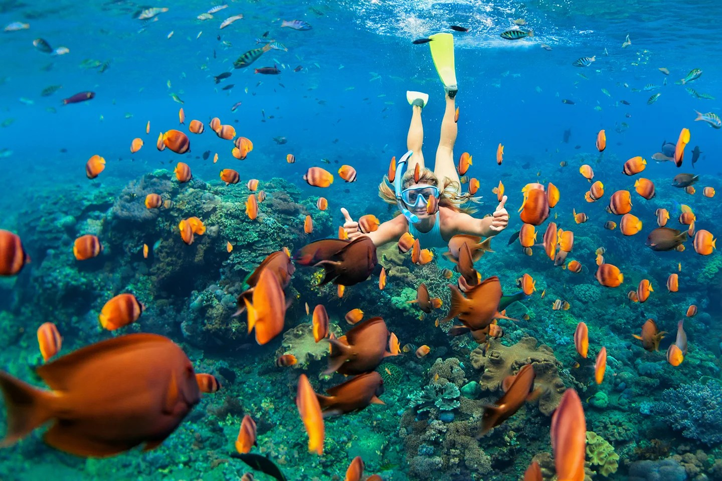 A woman snorkeling on an underwater reef around brightly-colored fish