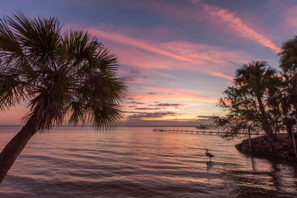 Image shows palm trees in the foreground and the Indian River in the background, during a sunset