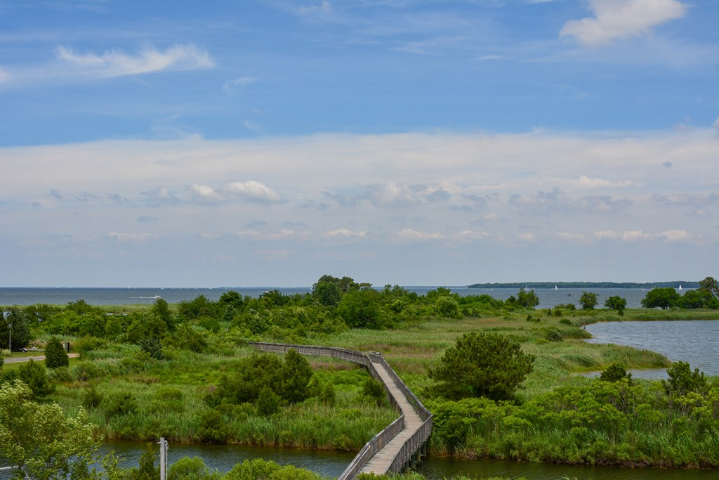 A wooden walkway leading over lush greenery on Kent Island, MD, with blue sky and clouds in the distance