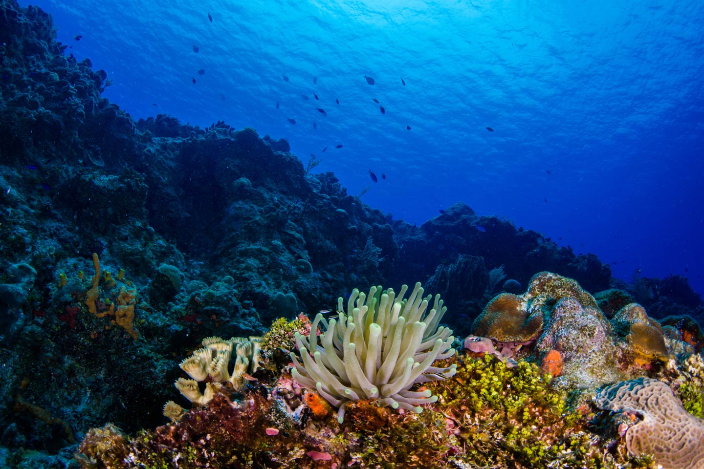 An underwater view of the Mesoamerican Reef showing coral, underwater wildlife, and the reef