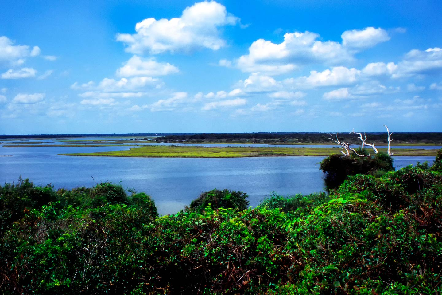 A view of Mosquito Lagoon from Turtle Mound on a sunny day, with greenery and the water in the distance