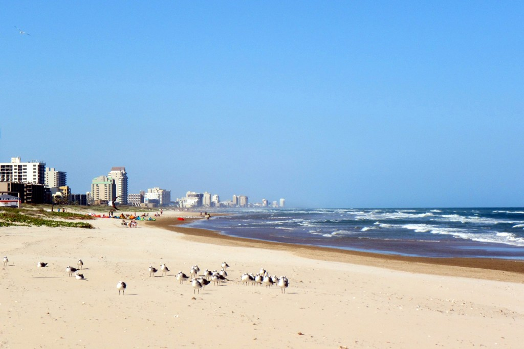 The beach at South Padre Island, Texas, with seagulls in the foreground and buildings stretching into the distance.