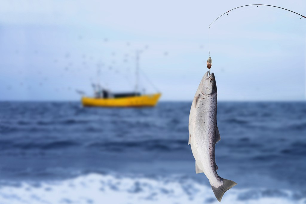 A Steelhead Trout hanging from a fishing pole with sea and a yellow fishing boat in the background.