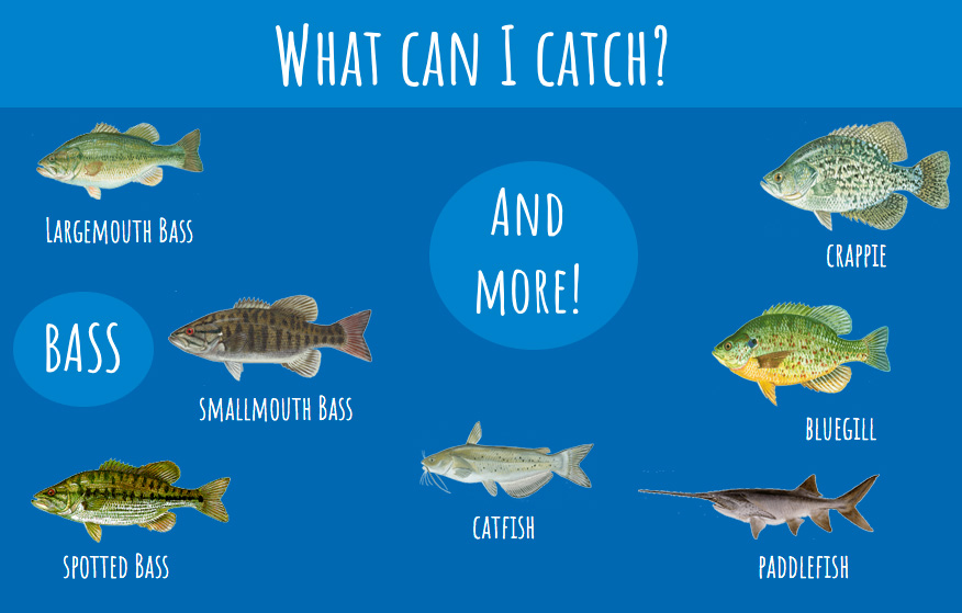 An infographic that shows all the species that can be caught in Table Rock Lake