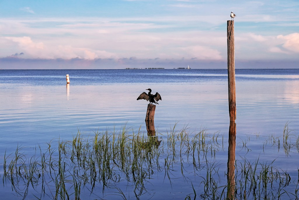 A view across Tampa Bay, FL at dusk. In the foreground, a cormorant dries its wings on a short pole sticking out of the water and a seagull stands on a taller pole on the right. There is a buoy on the left and the sail of a ship on the horizon.