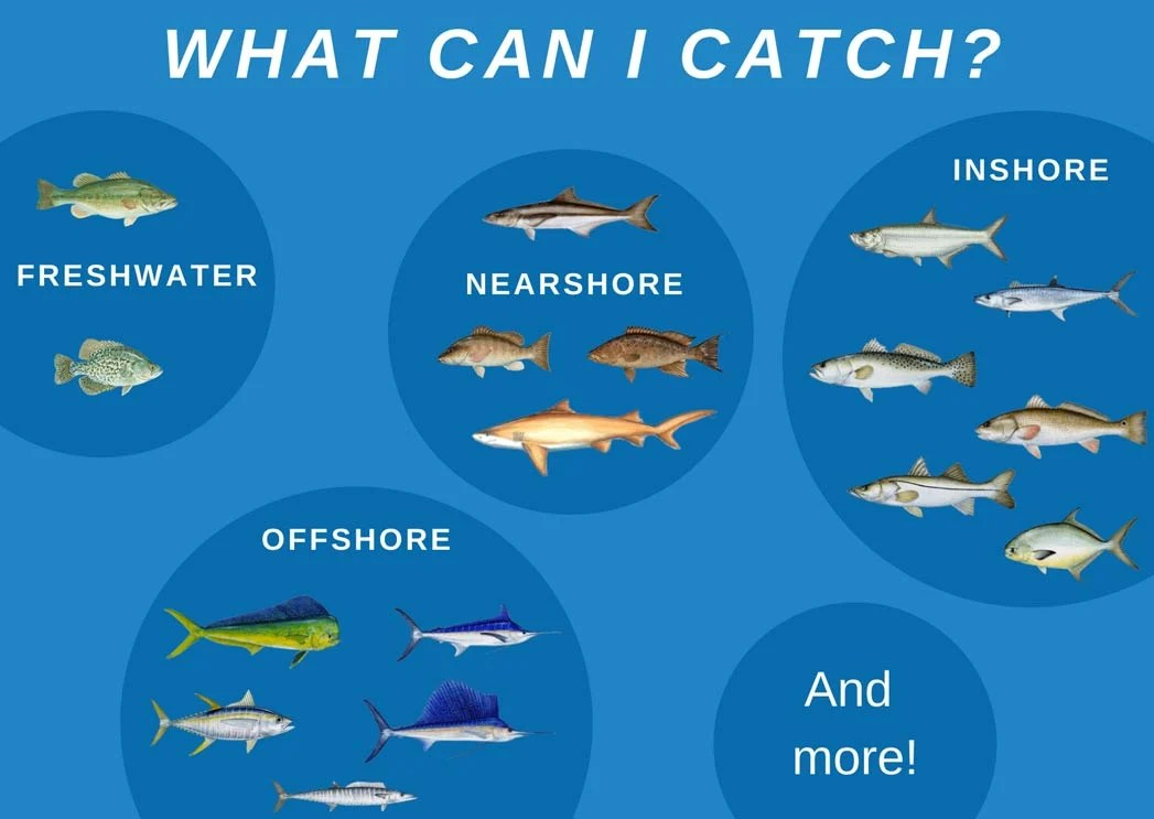 An infographic showing the top inshore, nearshore, offshore, and freshwater catches in Sebastian Inlet: Mahi Mahi, Tuna, Marlin, Sailfish, Wahoo, Snappers, groupers, Largemouth Bass, Crappie, Cobia, Sharks, Redfish, Tarpon, Mackerel, Pompano, Speckled Trout, and Snook