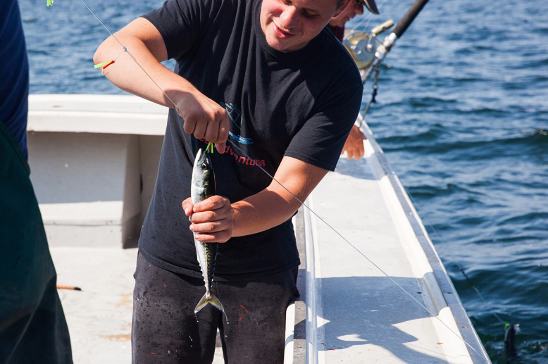 An angler hooking live mackerel onto a fishing line to catch Bluefin Tuna