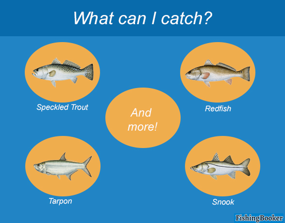 An infographic outlining the Indian River's top catches: Redfish, Speckled Trout, Snook, and Tarpon.