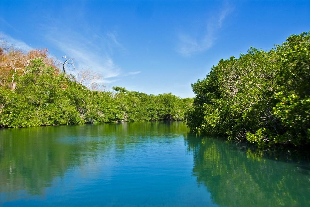 an estuary in the mangroves
