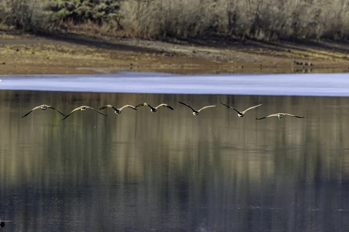 View of the Fish Lake as birds fly over the water surface looking for fish.
