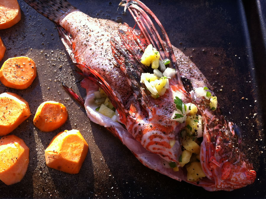 An invasive Lionfish being cooked on a griddle, with sweet potatoes on the side.