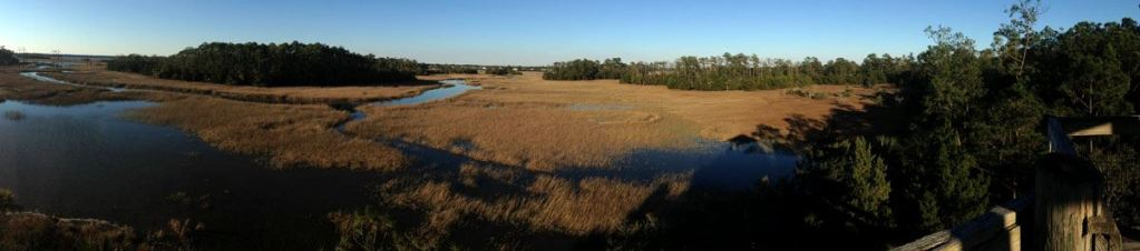 a look at the creeks from Palmetto Islands County Park pier
