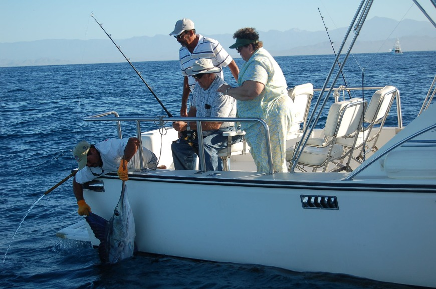 releasing sailfish in cabo