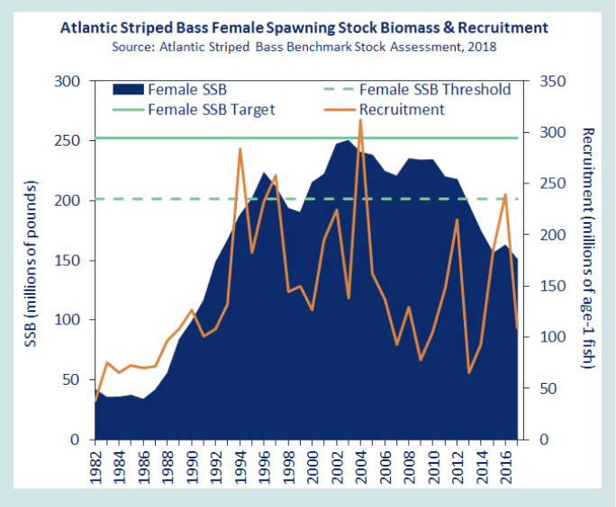 atlantic striped bass female spawning stock biomass and recruitment. this is a report by the ASMFC which contributed to Striped Bass fishing season closures
