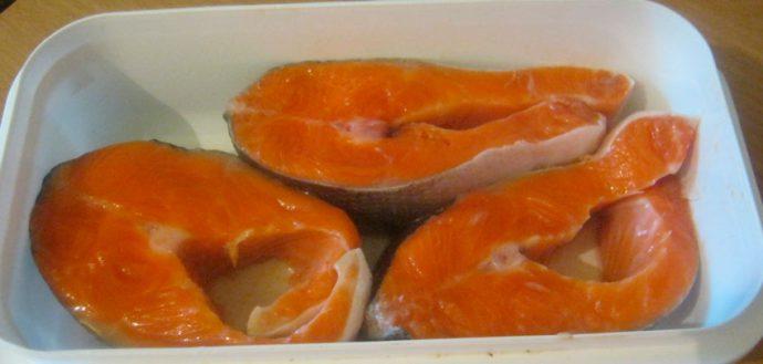 Duta Basah Ikan Merah