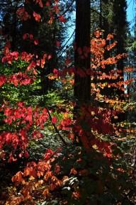 Big Trees & Fall Color
