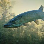 Saskatchewan Fishing.