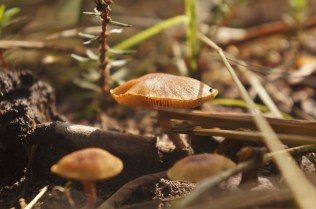 Mushrooms during rainy season