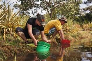 Allison and Matt stocking fingerlings into a nursery pond