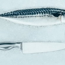 Best Fishing Fillet Knife