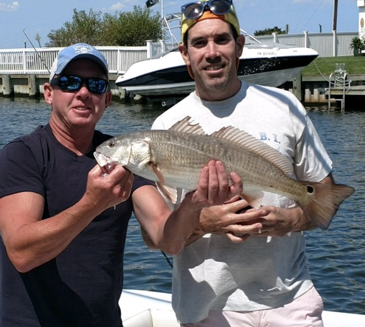 Here's a redfish that was caught in the LBI bay by Mike Greene.