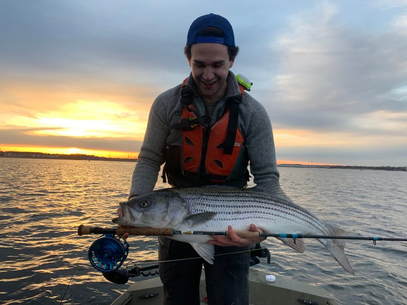"Neal Hafner caught this 39.5"" striped bass fishing the fly in Raritan bay on Saturday evening."