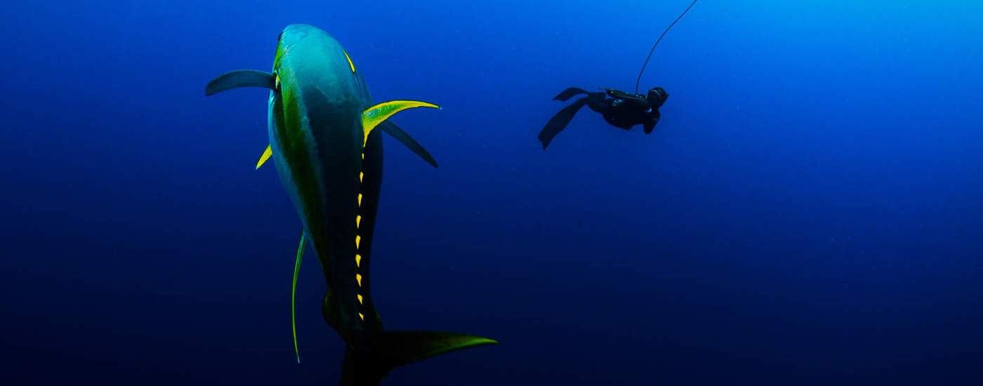 ascension island spearfishing diving in the den of giants fishing tackle retailer