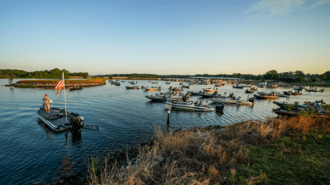 MLF Announces New Toyota Series Wild Card Division