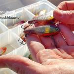 ปลายาง สุดยอด 5 ตัวที่ต้องลอง