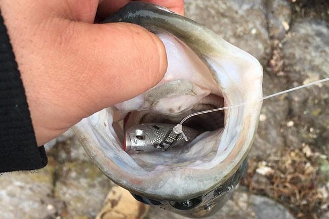ปลายาง