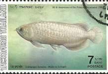 ปลาตะพัดไทย