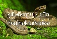 งูพิษ