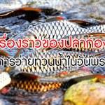 ปลากอง