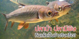 ปลาบ้า