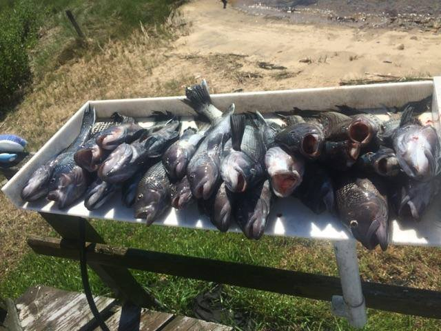 fishing-charters-in-ct___