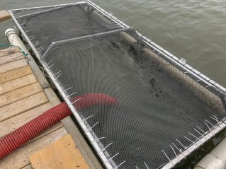 Net Pen for the young Chinook Salmon.