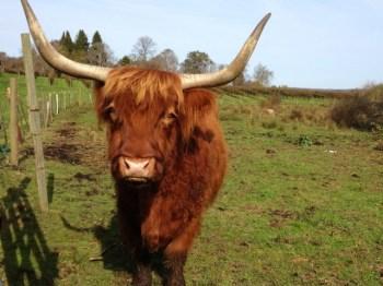 A Yak An Ox Amp A Cow Walk Into A Bar Fish Of Gold