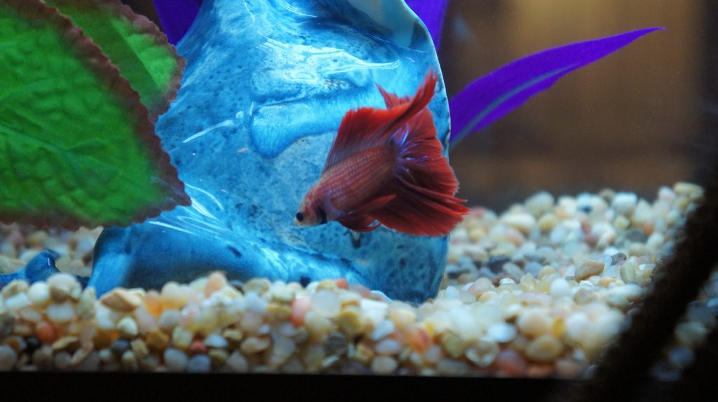 best betta fish tanks aquarium kits 2018 buyer 39 s guide