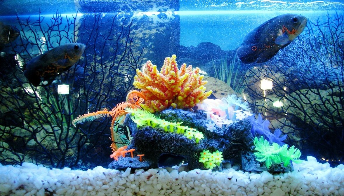 fish tank setup guide