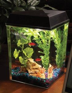 api aquaview corner aquarium kit