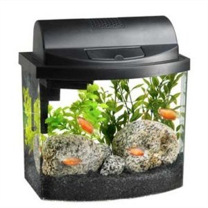 aqueon mini bow 2.5 gallon desktop aquarium kit